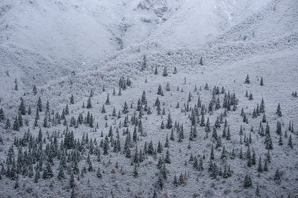 Mountain landscape with snow and trees of Hu Zhu Pass, Tibetan Plateau, Qinghai, China