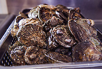 Oysters ready to be shucked at Faro Italian Grille.  (Karen Bobotas/for the Laconia Daily Sun)