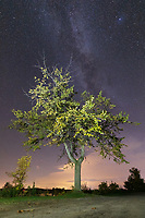 https://Duncan.co/tree-and-night-sky