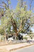 Syc tree
