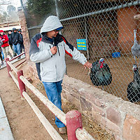 Anderson Hoskie passes a Tązhii, wild turkey, while telling stories about the animal during Winter Stories and Songs at the Navajo Nation Zoo in Window Rock Wednesday.