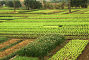 Vietnam Agriculture Red River (Song Hong) Valley