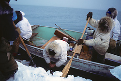Tying Block & Tackle To Bowhead Whale