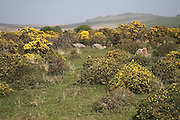 Preseli Hills, Pembrokeshire, Wales