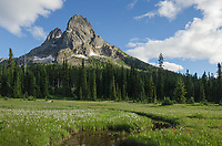 Liberty Bell Mountain seen from green meadows of Washington Pass, North Cascades Washington