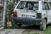 Livestock animals appear to be distressed as they stand outside their houses after a chain of massive explosions at an ammunition depot over the weekend killed 26 people and leave over 300 injured near the Tirana capital of Albania on Sunday, March 16, 2008. (Photo by Vudi Xhymshiti)