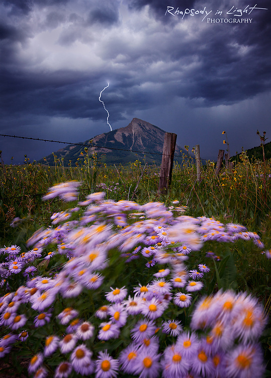 Motion-blurred purple fleabane daisies on a blustery afternoon. I used a lightning trigger to capture the lightning bolt.