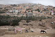 A lone horse walks among shacks on the outskirts of Wadi Musa, Jordan.