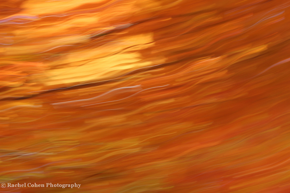 """""""Molten Gold""""<br /> <br /> This beautiful autumn born abstract appears like molten gold in color and flow!!<br /> <br /> Nature Abstracts by Rachel Cohen"""