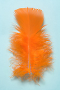 a feather in an orange color