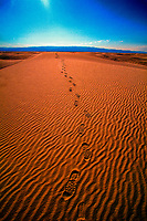 Footprints in the sand, White Sands National Monument near Alamogordo, New Mexico USA