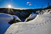 Winter tracks at McIntyre Creek, Yukon
