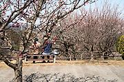 Cherry blossom watching Japan