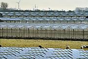 Nederland, Westland, 8-2-2018Kas, kassen in het kassengebied van het Westland. Er worden groente en planten in gekweekt. Het gebied tussen Naaldwijk en de kust is belangrijk vanwege de tuinbouw. Hier liggen de kassen tussen de rand van de bebouwde kom en de duinen, duingebied .Foto: Flip Franssen