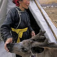 """MONGOLIA, Darhad Valley. Tsataan (""""reindeer people"""") woman feeds sugar to one of her favorite calves."""
