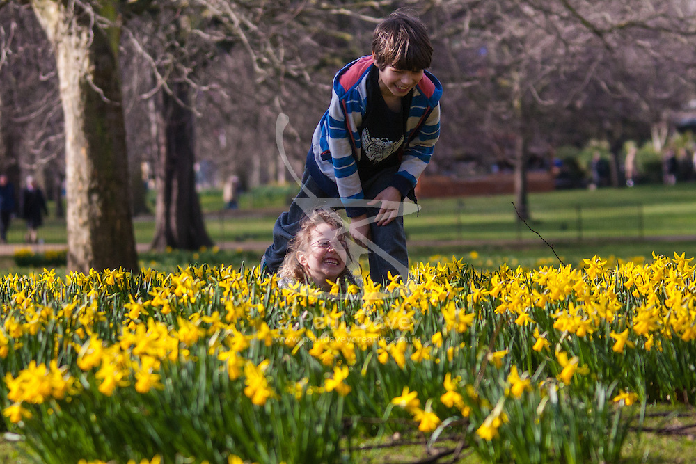 London, March 6th 2015. Londoners and tourists enjoy the warm sunshine in St James's Park as daffodils bloom, heralding the approach of spring. PICTURED: Rowan, 9, and his sister Stella play amongst the daffodils.