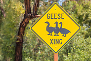 Geese Crossing Sign at Mason Park