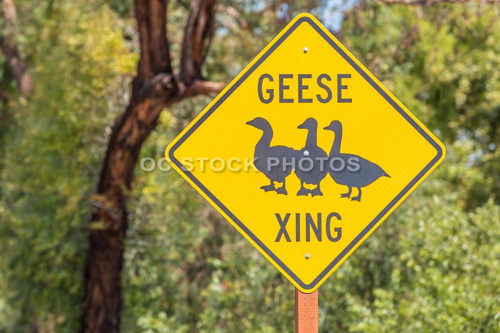 Geese Crossing Sign at Mason Park
