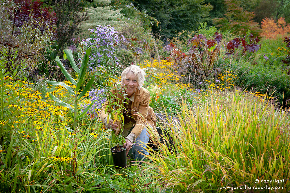 Carol Klein preparing to add Aster 'Little Carlow' to a border for late autumn interest
