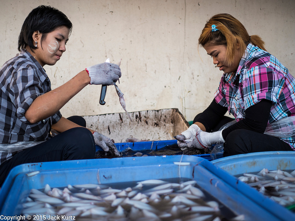 "11 JUNE 2015 - MAHACHAI, SAMUT SAKHON, THAILAND:  Burmese migrant workers at the Talay Thai market in Mahachai clean squid. Labor activists say there are about 200,000 migrant workers from Myanmar (Burma) employed in the fishing and seafood industry in Mahachai, a fishing port about an hour southwest of Bangkok. Since 2014, Thailand has been a Tier 3 country on the US Department of State Trafficking in Persons Report (TIPS). Tier 3 is the worst ranking, being a Tier 3 country on the list can lead to sanctions. Tier 3 countries are ""Countries whose governments do not fully comply with the minimum standards and are not making significant efforts to do so."" After being placed on the Tier 3 list, the Thai government cracked down on human trafficking and has taken steps to improve its ranking on the list. The 2015 TIPS report should be released in about two weeks. Thailand is hoping that its efforts will get it removed from Tier 3 status and promoted to Tier 2 status.       PHOTO BY JACK KURTZ"