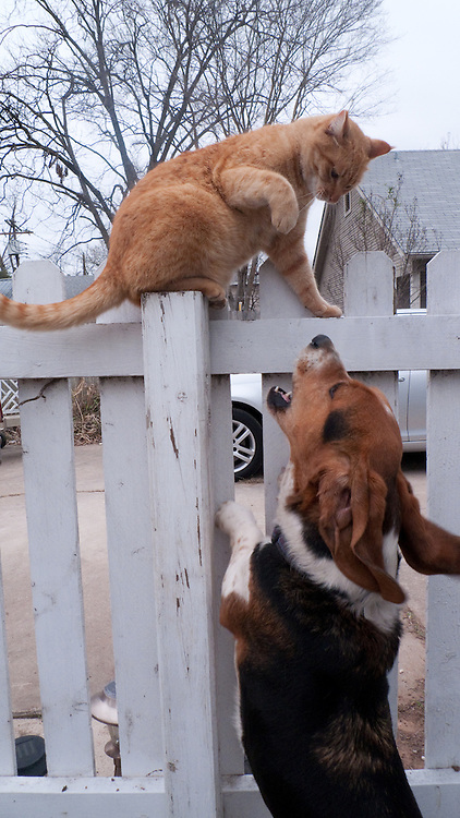A dog and a cat in a playful tussle.