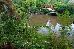 North America, United States, Washington, Renton, red bridge in Kubota Japanese Garden