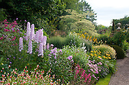 Delphinium 'Tiddles' in the main herbaceous border at Wollerton Old Hall, Markety Drayton, Shropshire, UK