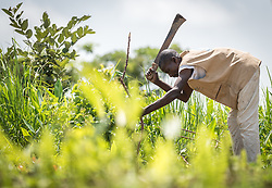 4 June 2019, Meiganga, Cameroon: A man cuts up wood at a farm near the Ngam refugee camp. A group of CAR refugees have been trained by the Lutheran World Federation in modern farming techniques. By keeping a strict ratio of how many seeds to sow per hectare, and by sowing Cassava and Groundnut together, they are able to both increase harvests and retain soil fertility over a longer time. Supported by the Lutheran World Federation, the Ngam refugee camp, located in the Meiganga municipality, Adamaoua region of Cameroon, hosts 7,228 refugees from the Central African Republic, across 2,088 households.