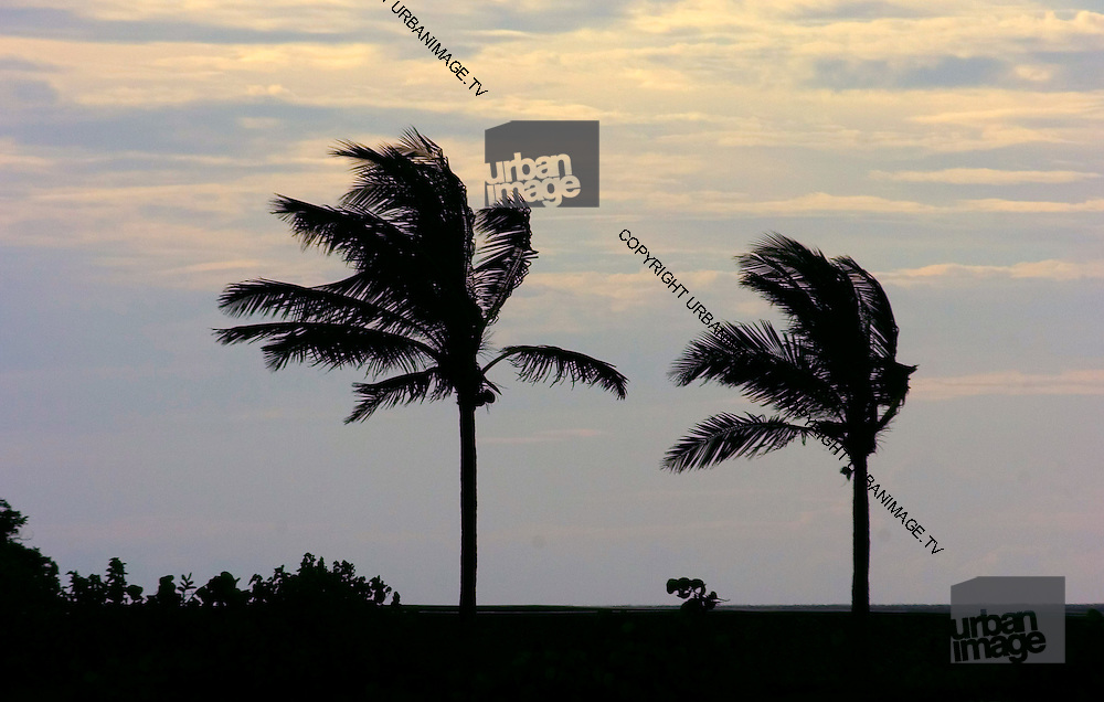 Two Palm Trees - Sunset in Port Maria