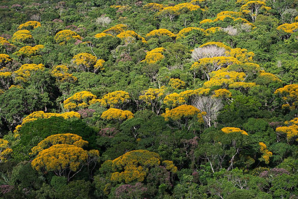 Rainforest Canopy<br /> Kupinang region<br /> GUYANA<br /> South America