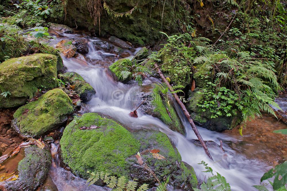 Small creek in Bwindi Impenetrable National Park, Uganda.