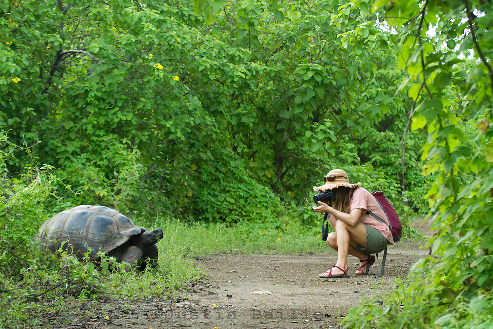 Young woman taking photo of Galapagos Tortoise while traveling in the Galapagos Islands, Ecuador.