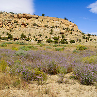 A sinkhole at the home of Lorraine Martin in Pinedale is obscured with sagebrush and wildflowers Tuesday.