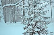 Wintertime in Ohio