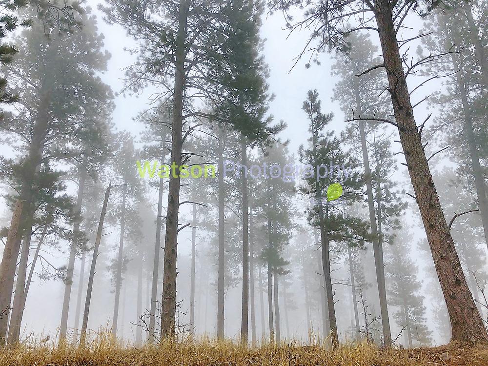 Woodlands of Spring Fog