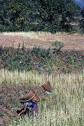 Harvesting / Jomosom Trail