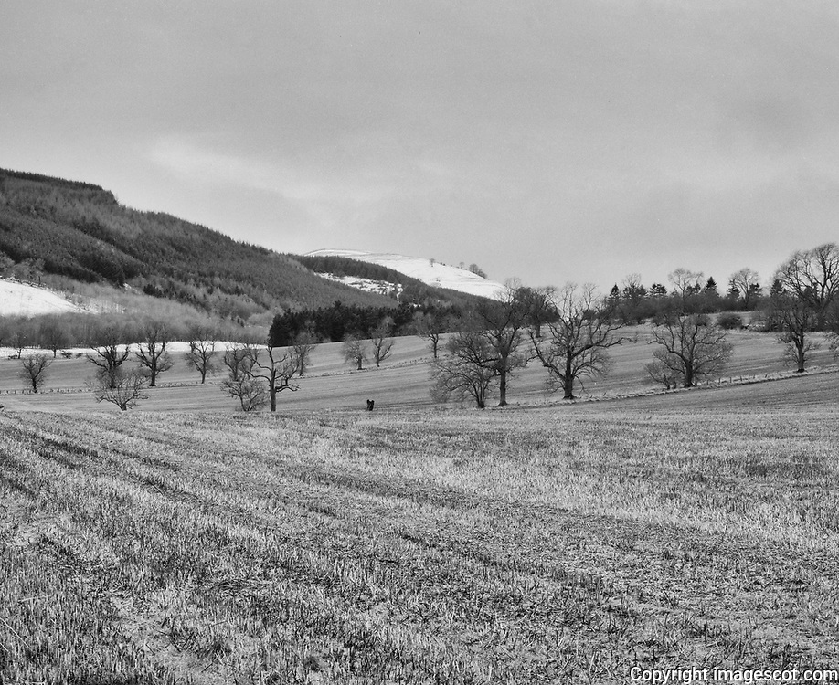 Farmland, blackandwhite, Perthshire, winter<br /> *ADD TO CART FOR LICENSING OPTIONS*