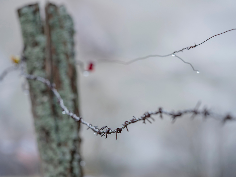 Close-up of barbed wire with water drop