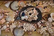 Shells, Fiji