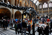 The Natural History Museum, London. Schoold children in the Grand Central Hall compare books.