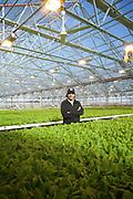 Queens, NY - November 18, 2016: A tour through the Gotham Greens greenhouse farm in Hollis.<br /> <br /> CREDIT: Clay Williams for Edible Queens.<br /> <br /> © Clay Williams / claywilliamsphoto.com
