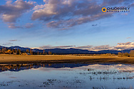 Sky reflects in flooded pasture with rustic barn in Whitefish, Montana, USA