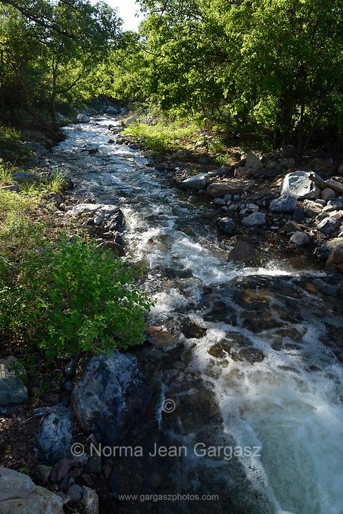 Monsoon rain swells a stream near Florida Canyon, Sonoran Desert, Coronado National Forest, Santa Rita Mountains, Sahuarita, Arizona, USA.