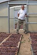 An employee of Donnafugata winery who is in charge of the grape drying process for their Passito di Pantelleria poses with a cluster of grapes in the company's stenditoio facility on Pantelleria