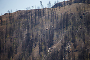 A hillside across shows the scars of fire and ash that claimed the land a year ago in 2014's Carlton Complex fire.<br /> <br /> Dean Rutz / The Seattle Times