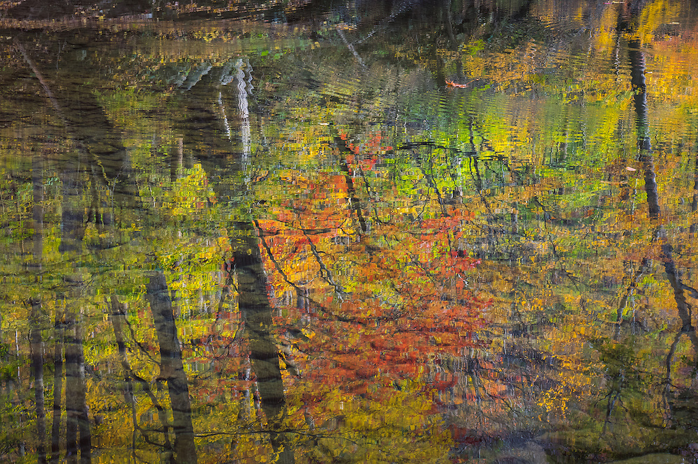 Ripples on the surface of the water and the smooth stones beneath conspire to create an abstract, imperfect mirror of a red maple and surrounding colorful autumn foliage in the Glade Creek area of the New River Gorge.