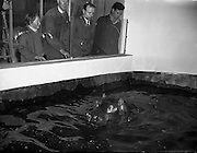 Gilbert the Hippopotamus arrives at Dublin Zoo, in Phoenix Park, Dublin, Ireland is the largest zoo in Ireland and one of Dublin's most popular attractions. <br /> <br /> 28/03/1958
