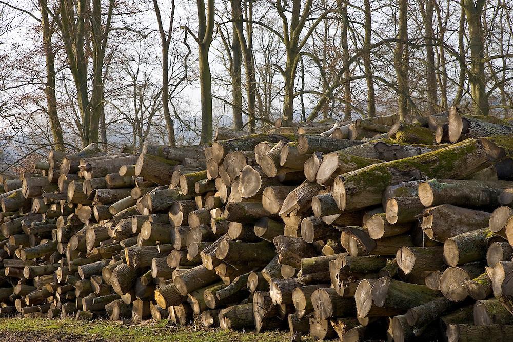 Pile of beech wood logs being seasoned , Gloucestershire, United Kingdom.