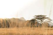 View of savannah with Acacia trees, Mlilwane Wildlife Sanctuary, Eswatini