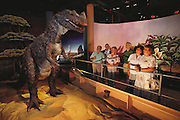 Museum visitors watch an animated model of a bipedal dinosaur Ceratosaurus sp. This life- sized model was based on fossil remains and comparative anatomy - enabling the stance and overall shape of the dinosaur to be inferred. The model is jointed to allow some degree of movement. Canberra Science Museum, Australia.  [1989].